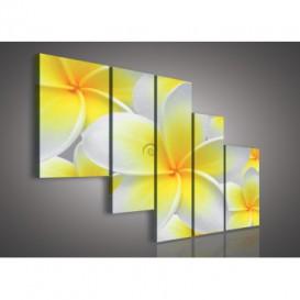 Obraz na plátne viacdielny - OB2328 - Žltobiely kvet