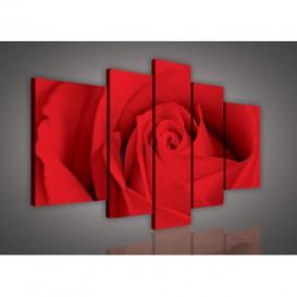 Obraz na plátne viacdielny - OB2343 - Červená ruža
