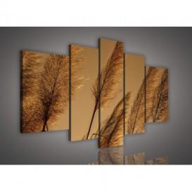 Obraz na plátne viacdielny - OB2533 - Suchá tráva