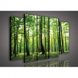 Obraz na plátne viacdielny - OB2747 - Brezový les