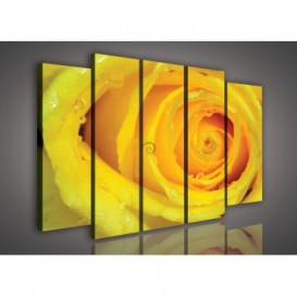 Obraz na plátne viacdielny - OB2788 - Žltá ruža