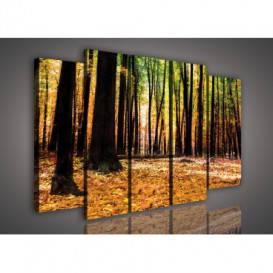 Obraz na plátne viacdielny - OB2874 - Jesenný les