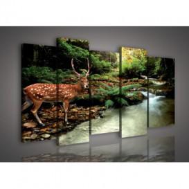 Obraz na plátne viacdielny - OB3010 - Jeleň v lese