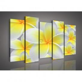 Obraz na plátne viacdielny - OB3011 - Žltobiely kvet
