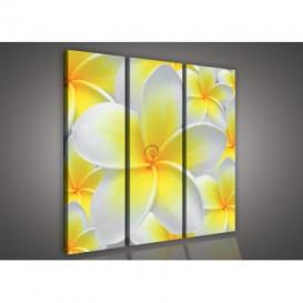 Obraz na plátne viacdielny - OB3039 - Žltobiely kvet