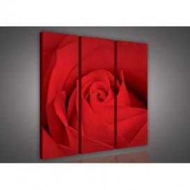 Obraz na plátne viacdielny - OB3051 - Červená ruža