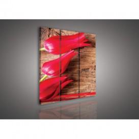 Obraz na plátne viacdielny - OB3055 - Tulipány