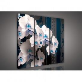 Obraz na plátne viacdielny - OB3155 - Biela orchidea modrý vzor