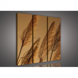 Obraz na plátne viacdielny - OB3164 - Suchá tráva