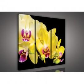 Obraz na plátne viacdielny - OB3168 - Žltá orchidea