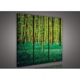 Obraz na plátne viacdielny - OB3192 - Zelený les