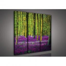 Obraz na plátne viacdielny - OB3193 - Fialový les