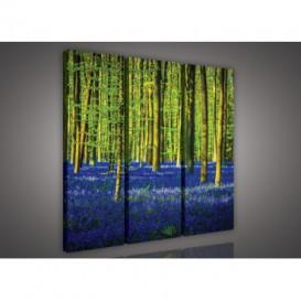 Obraz na plátne viacdielny - OB3194 - Modrý les