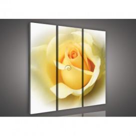 Obraz na plátne viacdielny - OB3220 - Žltá ruža