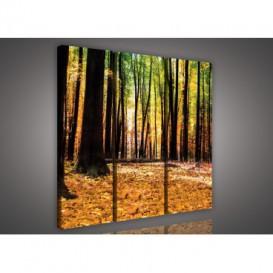 Obraz na plátne viacdielny - OB3249 - Jesenný les