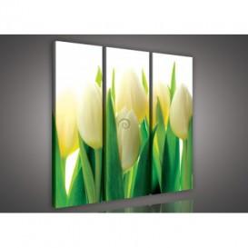 Obraz na plátne viacdielny - OB3295 - Žlto biele tulipány