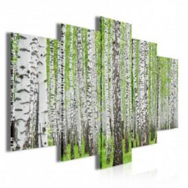Obraz na plátne viacdielny - OB3494 - Brezový les