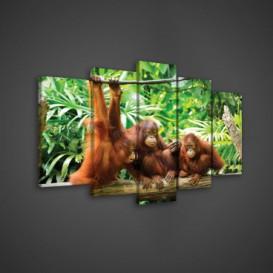 Obraz na plátne viacdielny - OB3634 - Opice