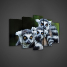 Obraz na plátne viacdielny - OB3637 - Lemury