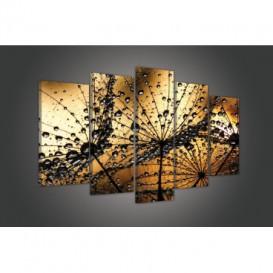 Obraz na plátne viacdielny - OB3703 - Púpava