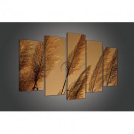 Obraz na plátně vícedílný - OB3735 - Suchá tráva