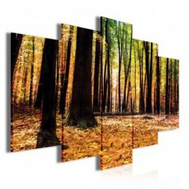 Obraz na plátně vícedílný - OB3751 - Jesenný les