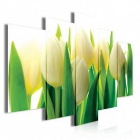 Obraz na plátně vícedílný - OB3758 - Žluto bílé tulipány