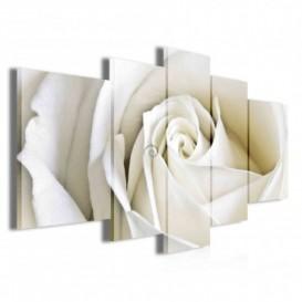 Obraz na plátne viacdielny - OB3797 - Biela ruža