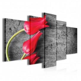 Obraz na plátne viacdielny - OB3842 - Červené tulipány