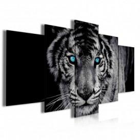 Obraz na plátne viacdielny - OB3945 - Čiernobiely tiger
