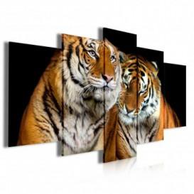Obraz na plátne viacdielny - OB3947 - Tigre