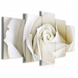 Obraz na plátne viacdielny - OB3953 - Biela ruža
