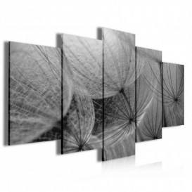 Obraz na plátne viacdielny - OB3993 - Púpava čierno biela