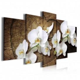 Obraz na plátně vícedílný - OB4040 - Bílé květy