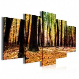 Obraz na plátně vícedílný - OB4059 - Jesenný les