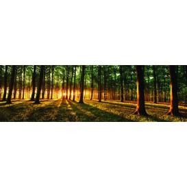 Rohová fototapeta - FT4032 - Slnko prenikajúce lesom