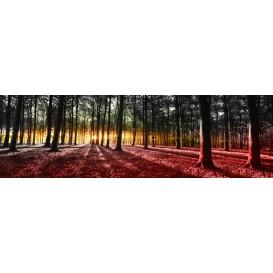 Rohová fototapeta - FT4033 - Slnko prenikajúce lesom