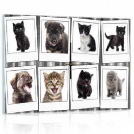 Nástenné hodiny - NH0191 - Mačky a psi