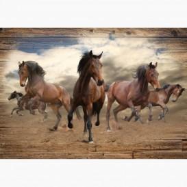 Fototapeta - FT6040 - Divocí koně