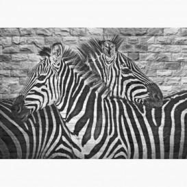 Fototapeta - FT6054 - Grafity zebry