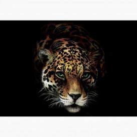 Fototapeta - FT6083 - Leopardí hlava