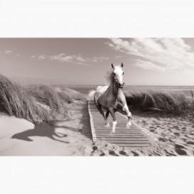 Fototapeta - FT6099 - Bílý kůň