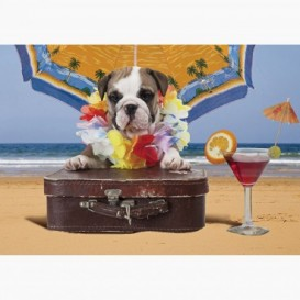 Fototapeta - FT6150 - Bulldog na dovolené