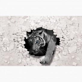 Fototapeta - FT6167 - Tiger