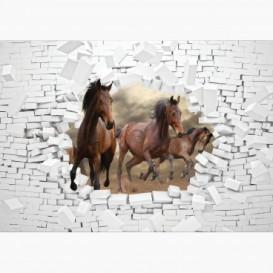 Fototapeta - FT6239 - Hnědé koně