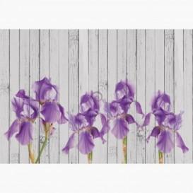 Fototapeta - FT6460 - Fialový Iris