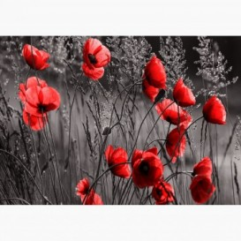 Fototapeta - FT6788 - Červené maky