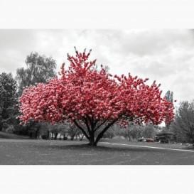 Fototapeta - FT6802 - Červený strom