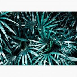 Fototapeta - FT7090 - Palmové listy