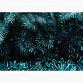 Fototapeta - FT7091 - Palmové listy